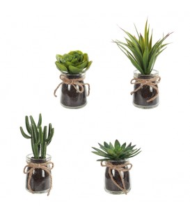 Plante succulente VERRE