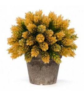 Yellow foliage plant in antique grey pot